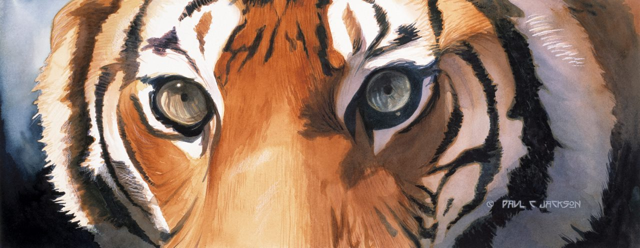 Eye Of The Tiger Pics eyes of the tiger - paul jackson store